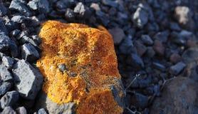 Musgo 1 do líquene do amarelo de Fuerteventura Imagem de Stock Royalty Free