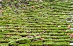 Musgo do telhado Imagem de Stock
