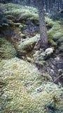 Musgo dos penhascos da montanha do túnel de Banff Foto de Stock Royalty Free