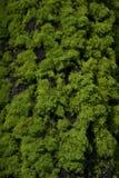 Musgo e casca da árvore Imagem de Stock Royalty Free