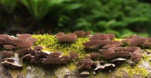 Musgo e cogumelos Imagem de Stock Royalty Free