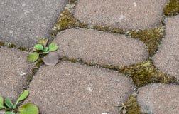 Musgo e ervas daninhas no fundo entre pavimentos imagens de stock royalty free