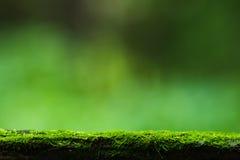 Musgo e fundo verde da natureza foto de stock royalty free