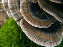 Musgo e fungo Foto de Stock