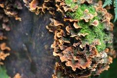 Musgo e fungos no log fotografia de stock royalty free