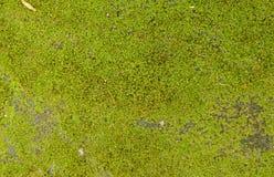Musgo e gota da água na terra do cimento fotos de stock