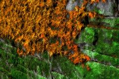 Musgo e hera na parede de pedra Fotografia de Stock Royalty Free