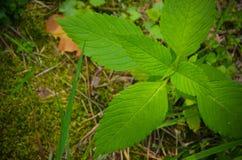Musgo e pouca planta no assoalho Fotos de Stock Royalty Free