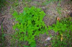 Musgo e pouca planta no assoalho Fotografia de Stock Royalty Free