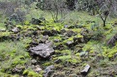 Musgo e rochas Fotografia de Stock
