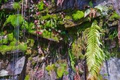 Musgo e samambaias em uma fonte Fotografia de Stock