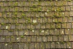 Musgo e telhas Fotografia de Stock Royalty Free