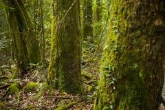 Musgo em árvores Imagens de Stock
