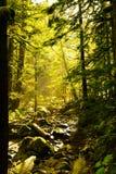 Musgo em árvores Fotografia de Stock