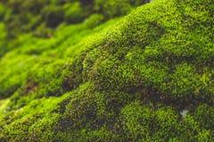 Musgo em pedras Imagem de Stock