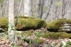 Musgo em rochas Imagem de Stock