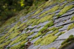 Musgo em telhas de telhado Fotografia de Stock