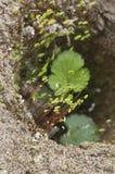 Musgo em um tijolo Fotos de Stock