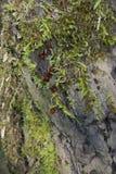 Musgo em uma rocha Fotos de Stock