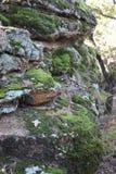 Musgo em uma rocha Imagens de Stock Royalty Free