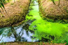 Musgo en canal del agua Foto de archivo