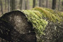 Musgo en el árbol Imagen de archivo