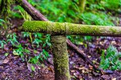 Musgo en el árbol en Ang Ka Luang Nature Trail Imágenes de archivo libres de regalías