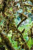 Musgo en el árbol en Ang Ka Luang Nature Trail Imagenes de archivo