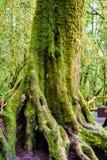 Musgo en el árbol en Ang Ka Luang Nature Trail Fotografía de archivo libre de regalías