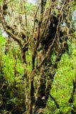 Musgo en el árbol en Ang Ka Luang Nature Trail Imagen de archivo libre de regalías