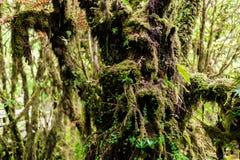 Musgo en el árbol en Ang Ka Luang Nature Trail Fotografía de archivo