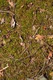Musgo en el bosque Fotos de archivo libres de regalías