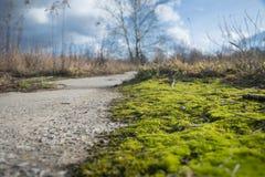 Musgo en el camino no frecuentado, día nublado Foto de archivo libre de regalías