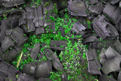 Musgo en el carbón de leña Imagen de archivo libre de regalías
