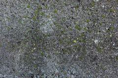Musgo en el concreto Foto de archivo libre de regalías