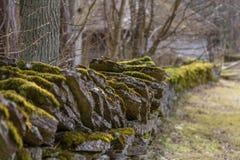 Musgo en la cerca encendido de piedra Imagenes de archivo
