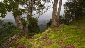 Musgo en la colina Foto de archivo libre de regalías