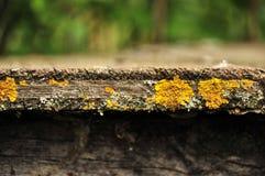 Musgo en la madera vieja Foto de archivo libre de regalías