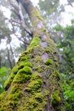 Musgo en la opinión de tronco de árbol de debajo foto de archivo