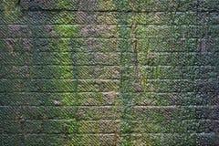 Musgo en la pared de piedra Foto de archivo libre de regalías