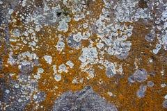 Musgo en la pared del bloque del cemento Imagen de archivo libre de regalías