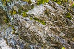 Musgo en la piedra Imagen de archivo