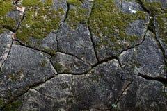 Musgo en la piedra Fotos de archivo