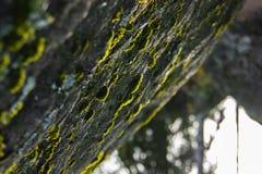 Musgo en la piedra abstraiga el fondo Horizonte invertido imagen de archivo