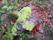 Musgo en la piedra Foto del otoño en la madrugada, después de la lluvia foto de archivo