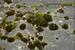 Musgo en la piedra sepulcral Imagen de archivo libre de regalías