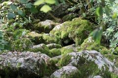 Musgo en la roca Fotografía de archivo libre de regalías