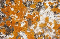 Musgo en la roca Imagenes de archivo