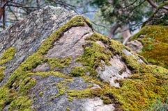 Musgo en la roca - Grampians Fotografía de archivo