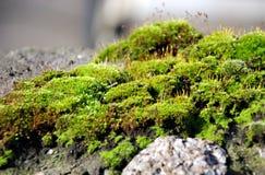 Musgo en piedra Foto de archivo